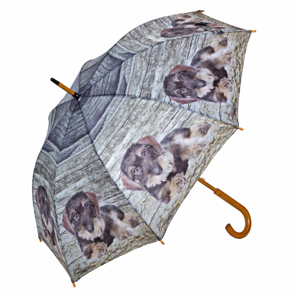 Regenschirm Rauhaardackel
